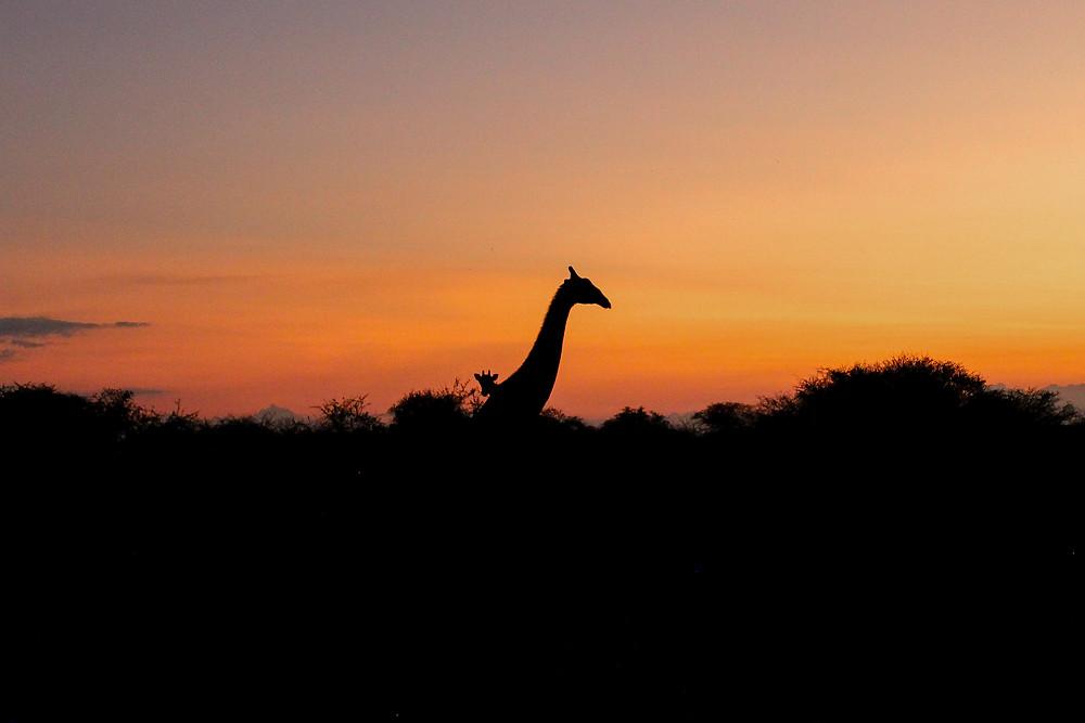 Namibia-Reisebericht-Rundreise-Regenzeit