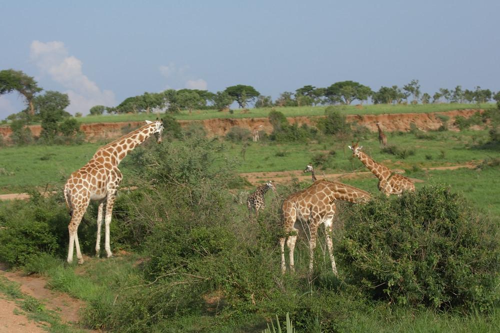 Safari-afrika-rundreise-tipps-urlaub-namibia-kenia