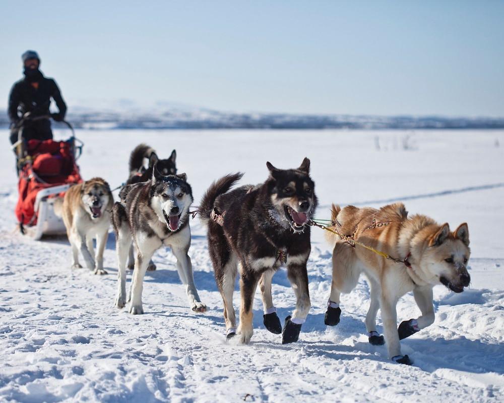 Husky-Tour-Schlittenfahrt-Hundeschlitten-deutschland