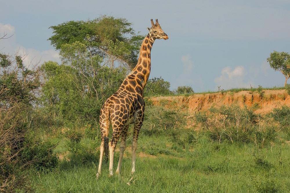 Uganda-Reisetipps-Reiseroute-individuell