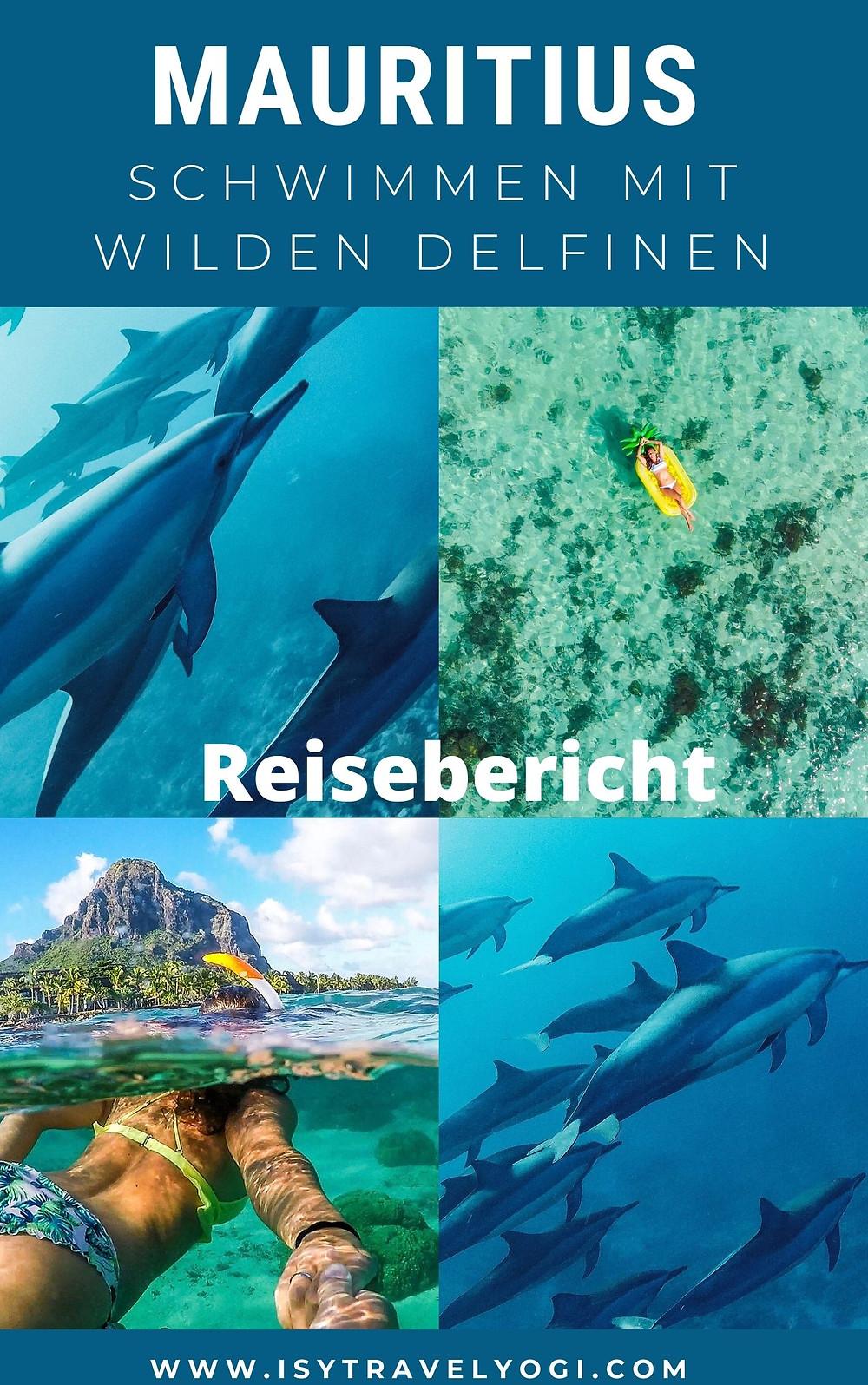 Mauritius-schwimmen-wilde-Delfine-Reisebericht-Erfahrungen
