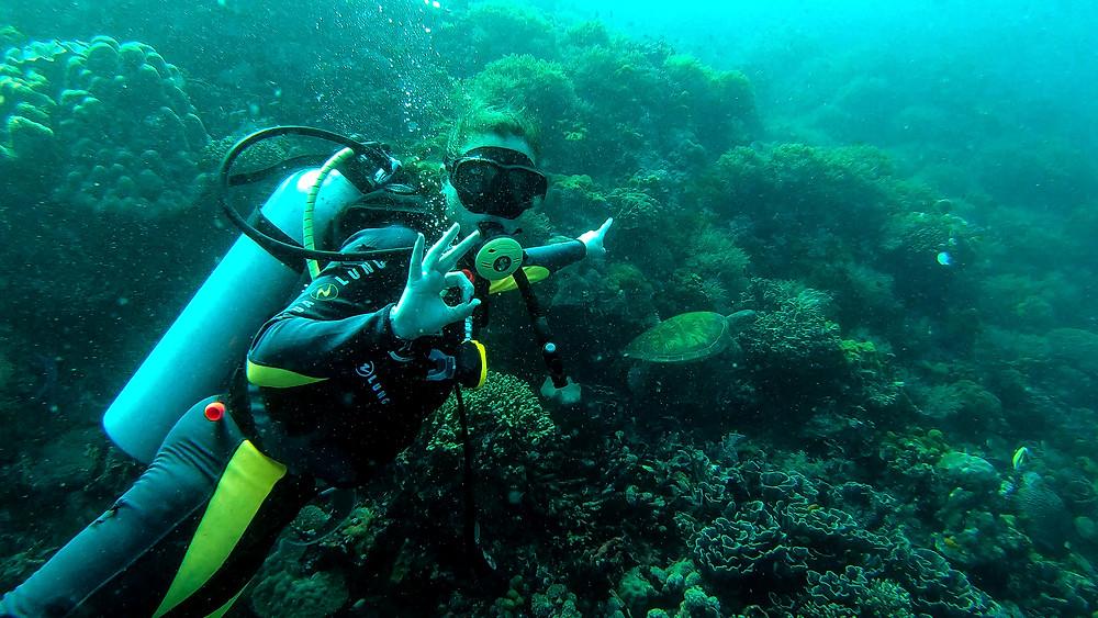 Apo-Island-Philippinen-Reisebericht-Tauchen-Schildkröten