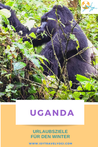 urlaubsziele-winter-warm-reisebericht-reisetipps-reiseideen-uganda