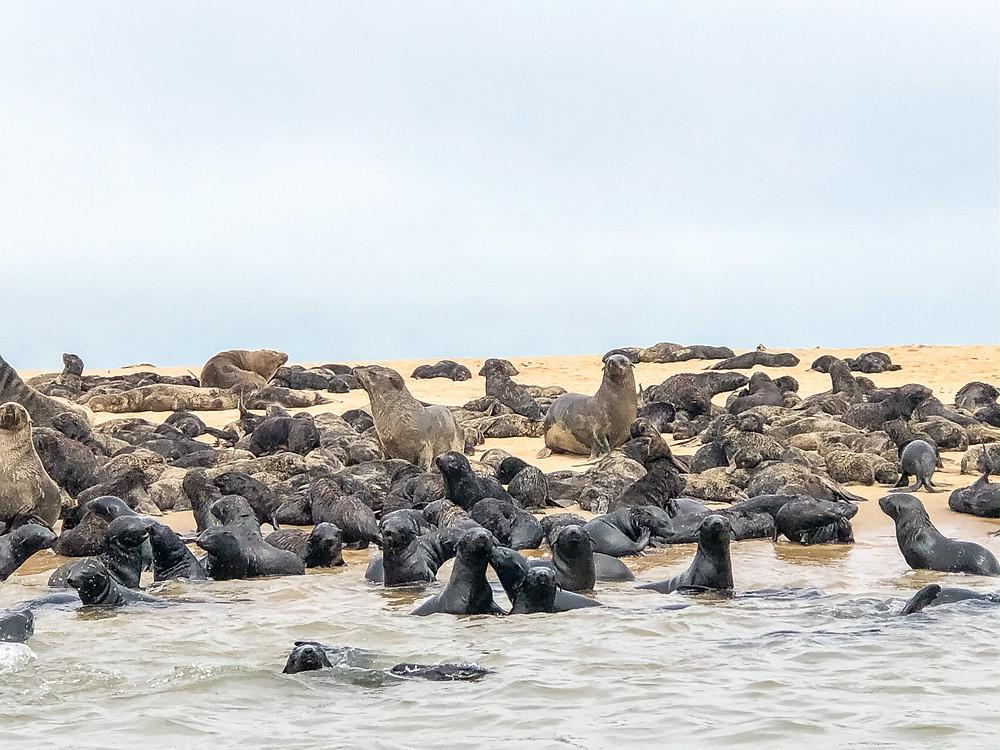 Namibia-walfischbucht-Walvis-Bay-Robben-Kajak
