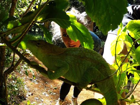 Unterwegs im Regenwald von Madagaskar