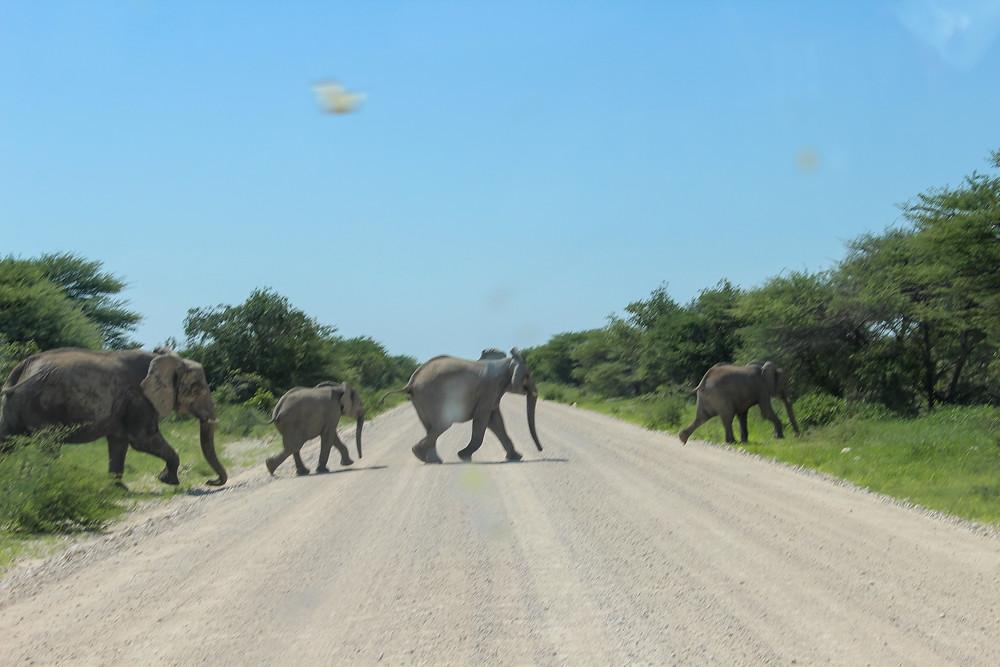 Etosha-Nationalpark-Namibia-Selbstfahrer-Camping-Regenzeit-Safari-Elefanten