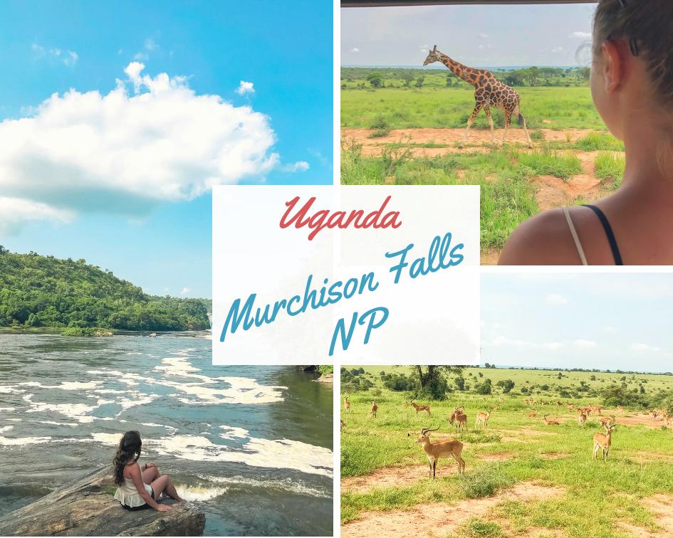 Uganda-Murchison-Falls-Nationalpark-Reisebericht