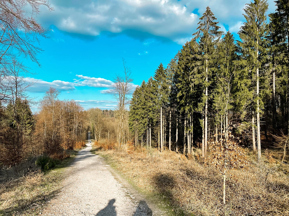 Wandern-externsteine-Tipps-Falkenburg
