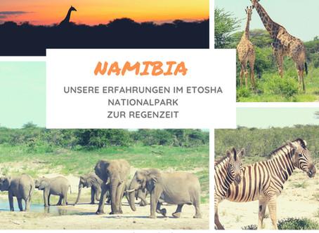 Namibia: Unsere Erfahrungen im Etosha Nationalpark als Selbstfahrer zur Regenzeit