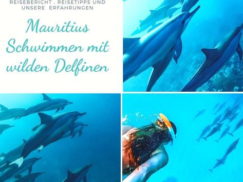 Mauritius: Schwimmen mit wilden Delfinen- Reisebericht und Erfahrung