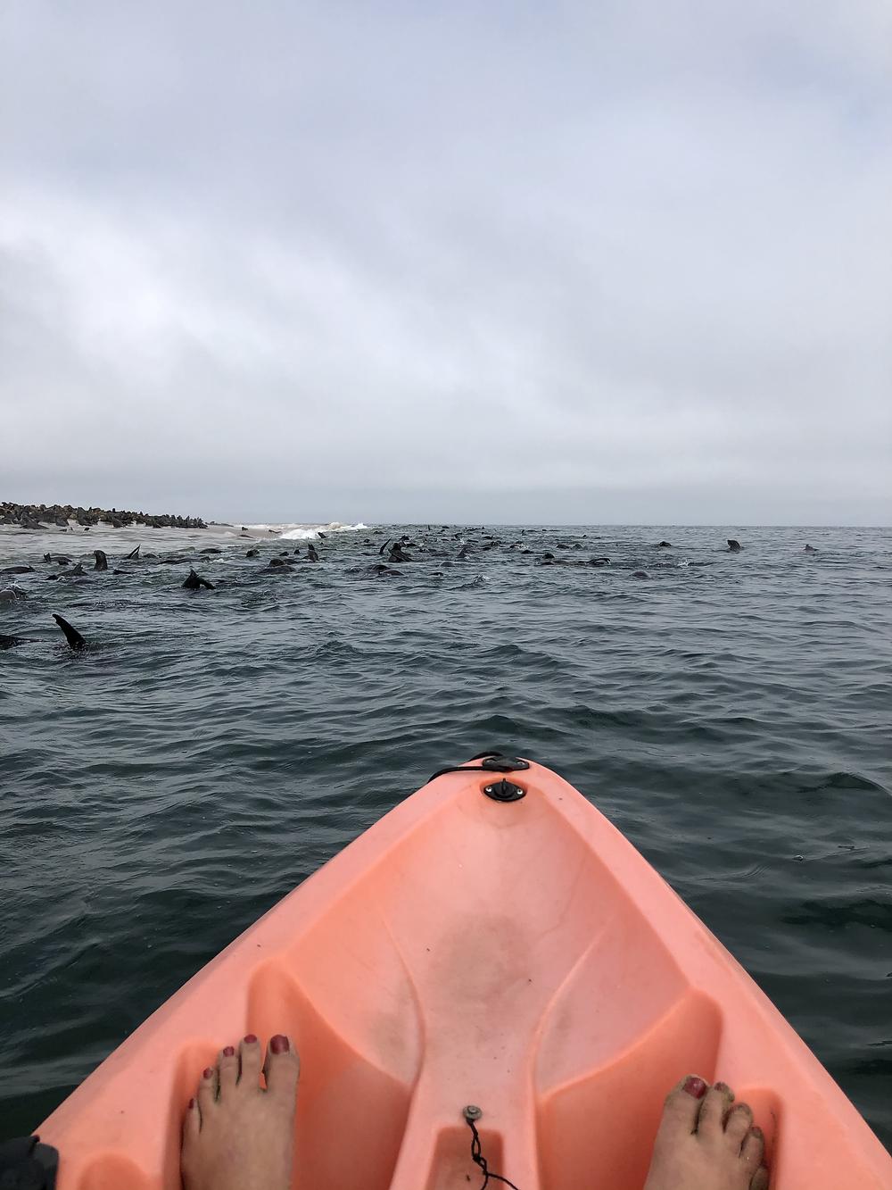 Namibia-Walfischbucht-Kajak-Robben-walvis-bay