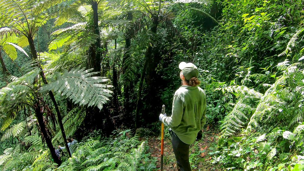 Uganda-Gorilla-Trekking-Kosten-Reisebericht-Regenwald