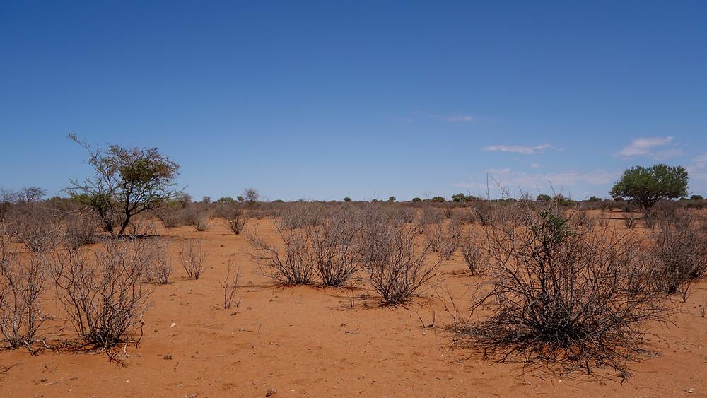 Kalahari-Wüste-Reisebericht-Namibia-Tipps