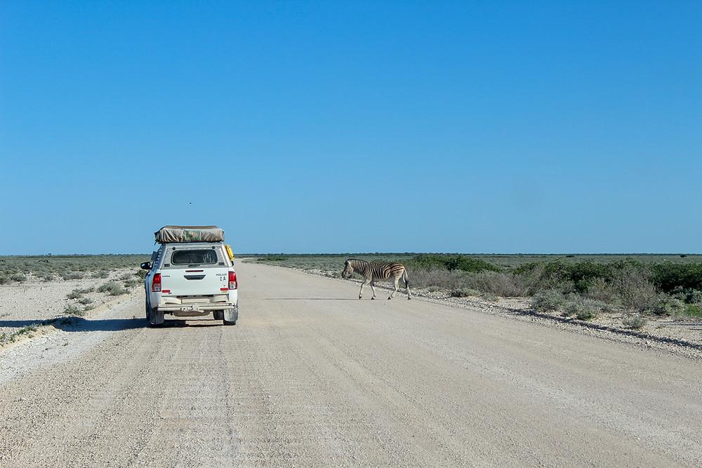 Etosha-Nationalpark-Namibia-Selbstfahrer-Camping-Regenzeit-Safari-Reisebericht