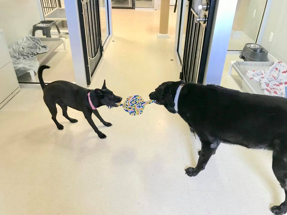 Two black dogs playing at Hope for Life