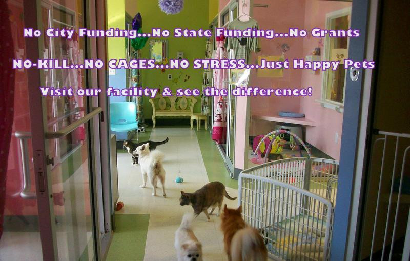 Hope for Life Rescue   Adoptions
