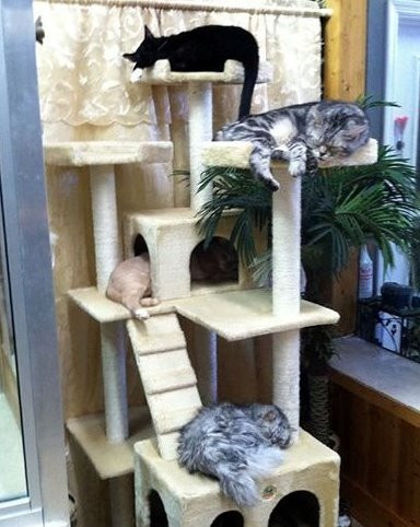 Cats sleeping at Hope for Life Rescue