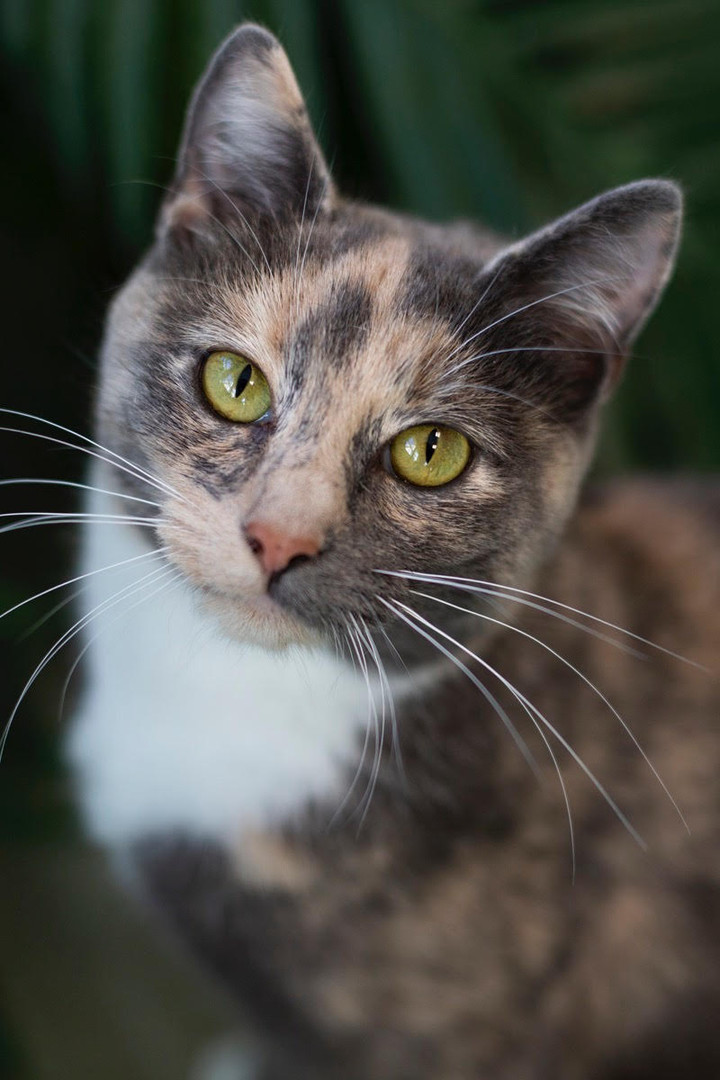 A cat waiting for adoption at Hope for Life
