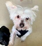 White dog waiting for adoption