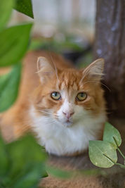 Sweet orange cat at Hope for Life