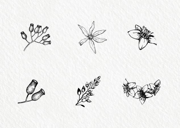 6 handdrawn floral graphic Illustrations