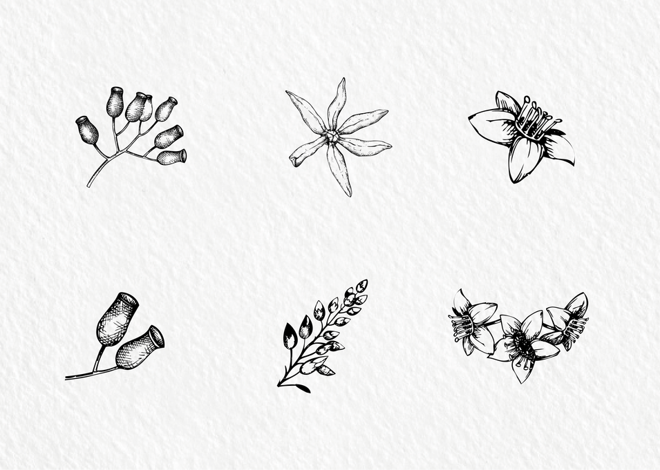 6 handdrawn floral graphic Illustrations