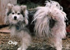 chip_goodpicB_edited.jpg