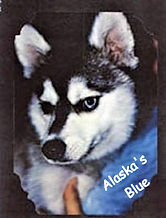 A_alaskas_blueB_edited.jpg