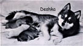 A_deshkaB_edited.jpg