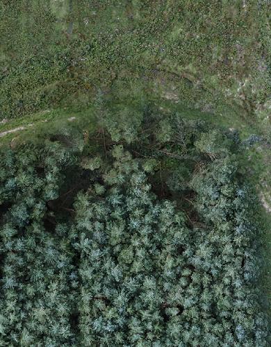website forest.PNG