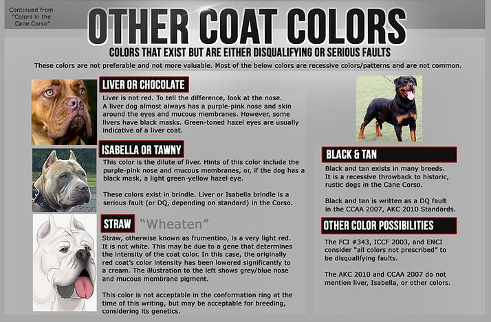Cane Corso Colors