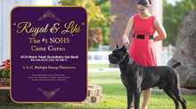 Lihi and Royal - #1 AKC NOHS!!!!