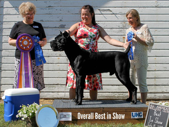 Brandy & Orion - UCK Best of the Best In Show