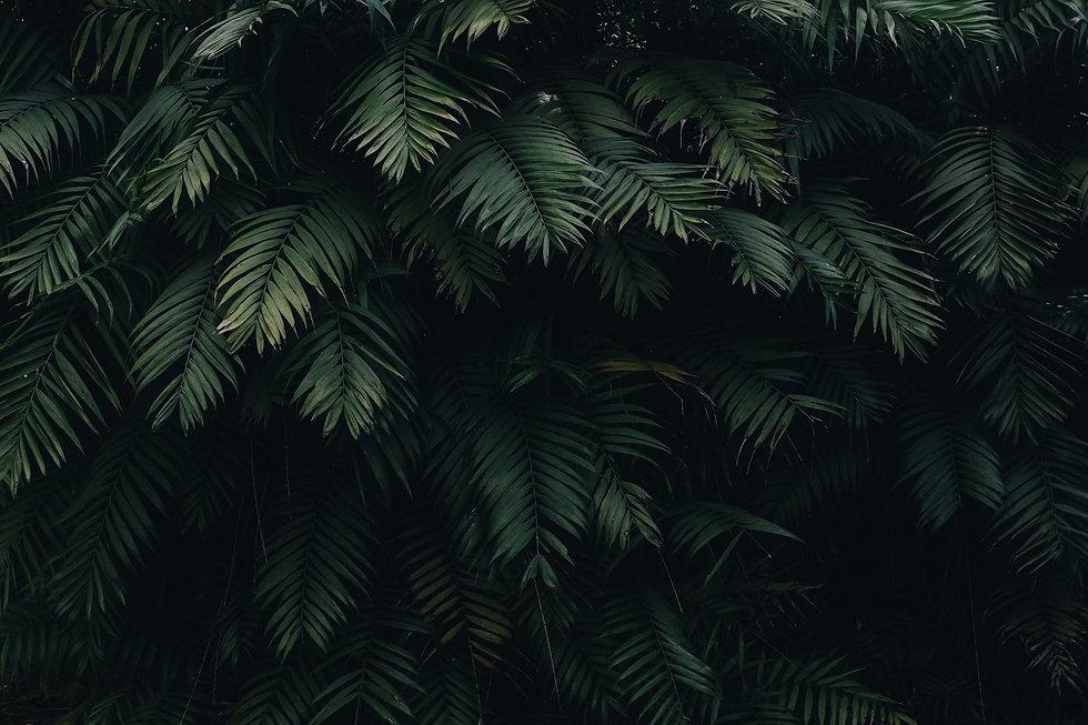 pexels-photo-1072179.jpeg