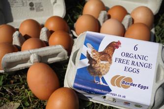Border Eggs Organic Free-Range Eggs