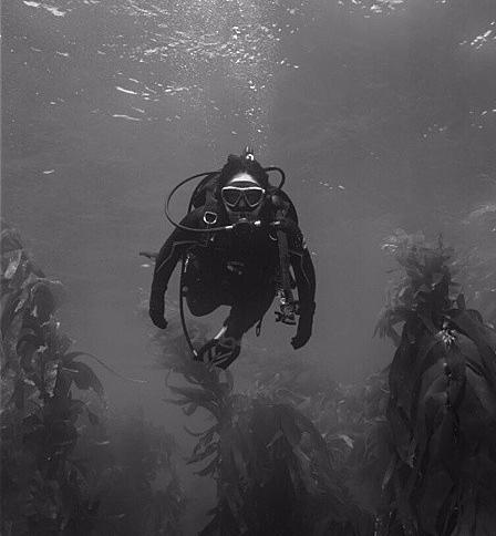 Sea Vixen Fall 2017