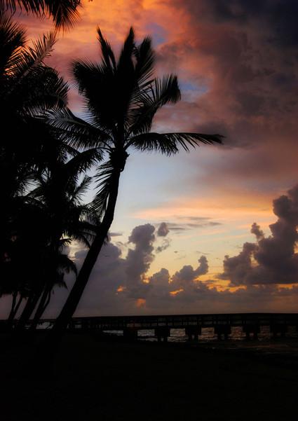 Key West Palms.jpg