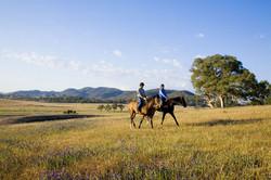 mudgee-horse-riding-900x600