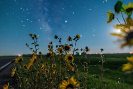 Moonlit Sunflower & Milky Way
