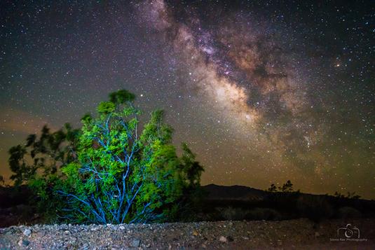 Fuzzy Bush in the Mojave Ntl Preserve
