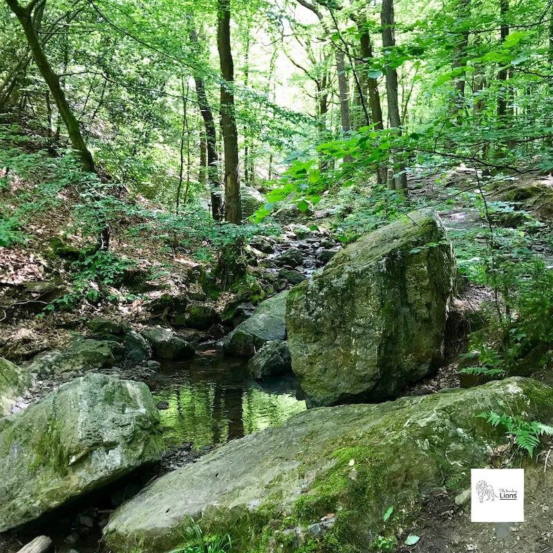 Bain rencontré au cours de la promenade de la vallée du Ninglinspo, à Nonceveux, Remouchamps, près d'Aywaille, en province de Liège.