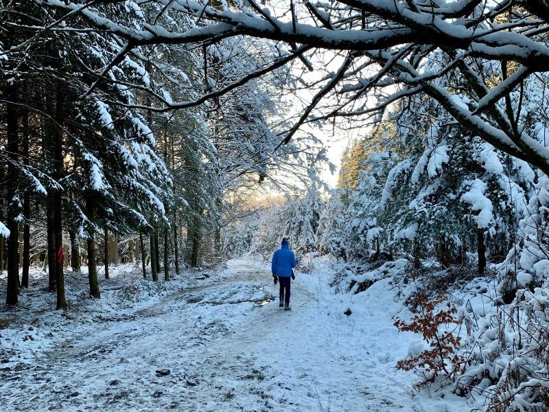 Promenade a travers la foret de coniferes et de feuillus enneiges de bastogne, dans le parc naturel des deux ourthes, dans les ardennes belges