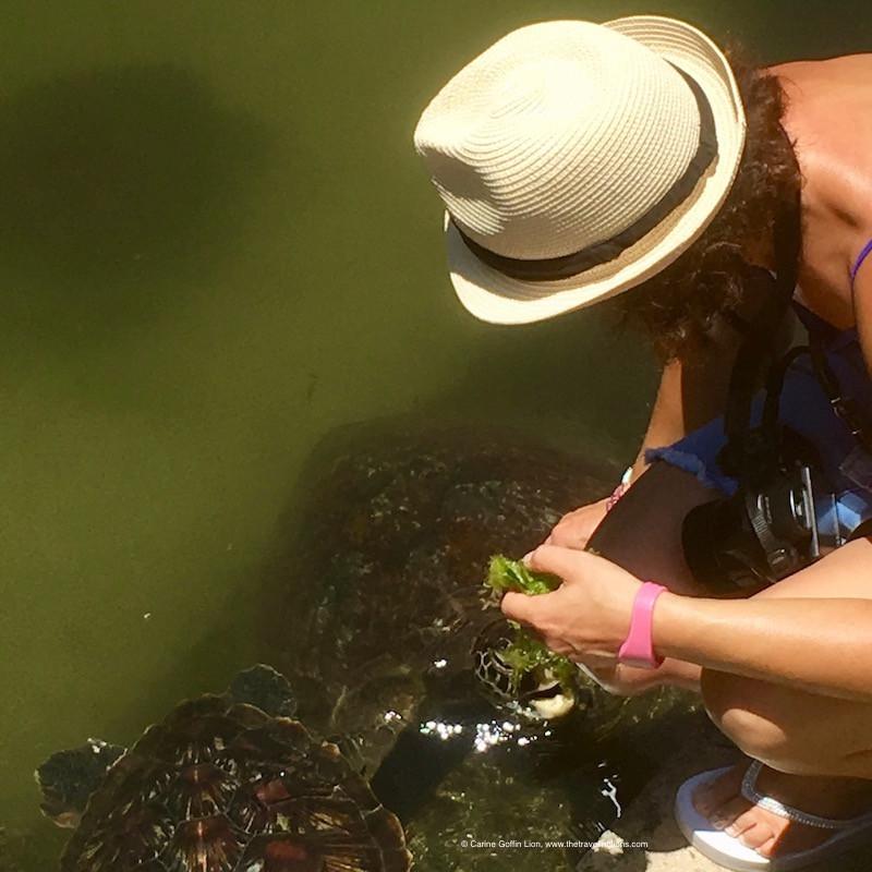 Nourrissage des tortues, à l'aquarium de Nungwi