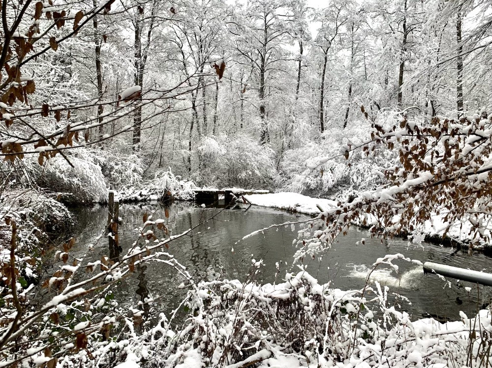 Étang et forêt enneigée dans la pisciculture du domaine provincial de Mirwart, près de Saint-Hubert, dans les Ardennes belges. Copyright Carine Goffin Lion pour The traveling Lions, tous droits réservés
