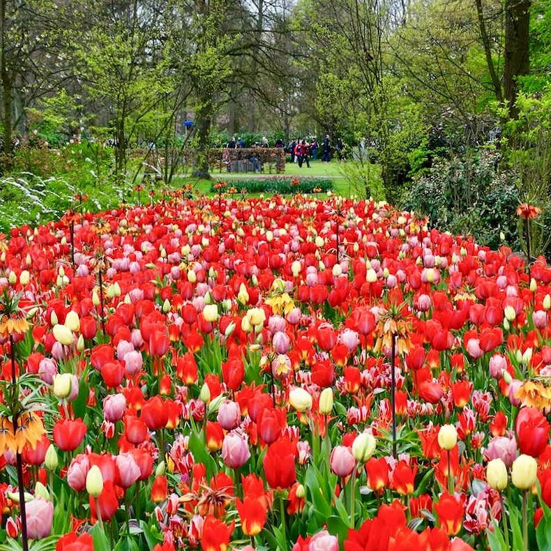 jardin de tulipes multicolores et de fritillaires impériales dans le parc keukenhof