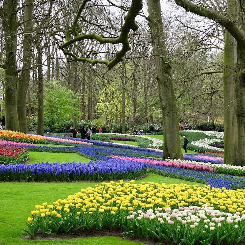 parc de tulipes et narcisses, à Lisse en Hollande