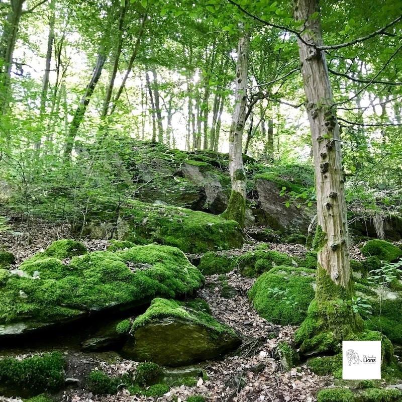 Bois dans la vallée du Ninglinspo (Nonceveux- Remouchamps)