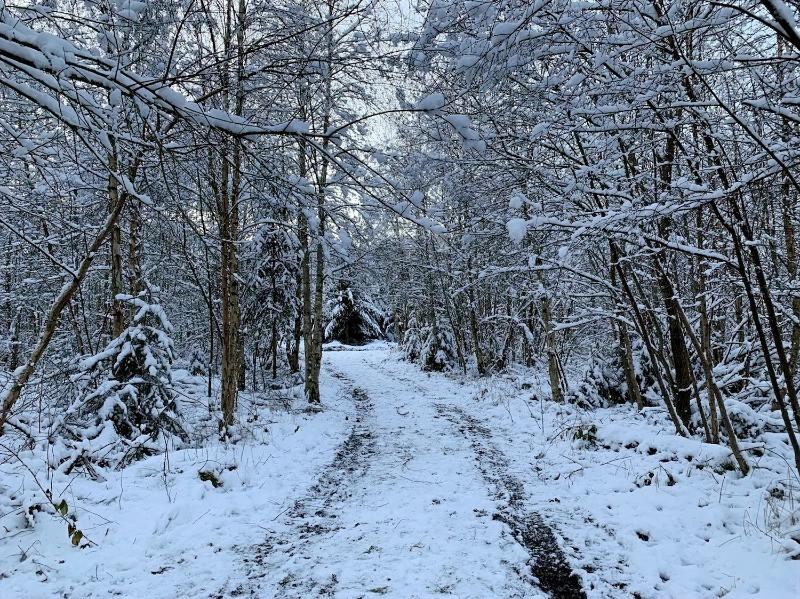 feuillus enneiges dans les bois de bastogne. L'hiver est la dans les ardennes belges.