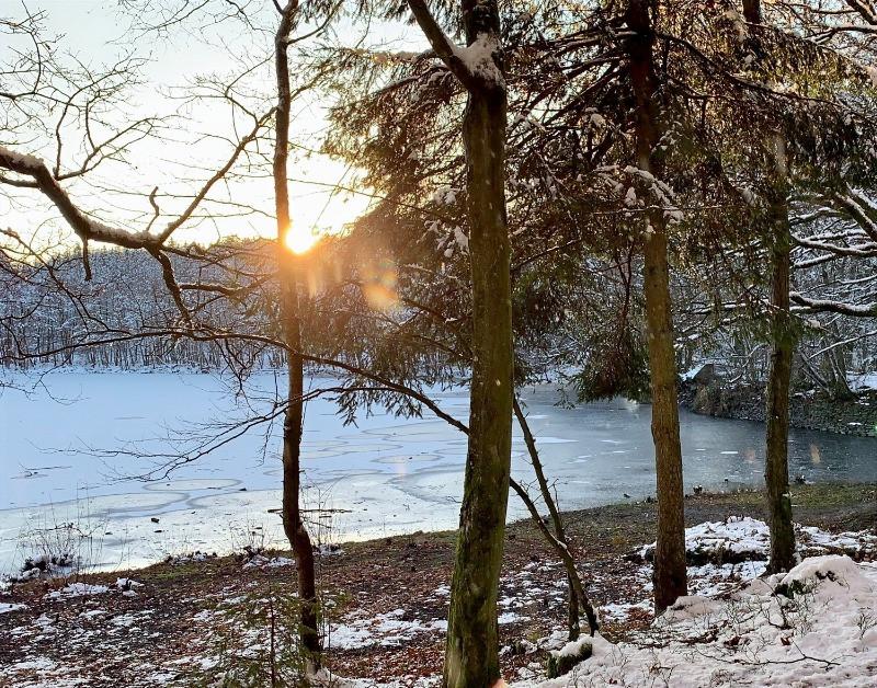 Etang gele dans les bois de bastogne, dans les ardennes belges et le parc naturel des deux ourthes