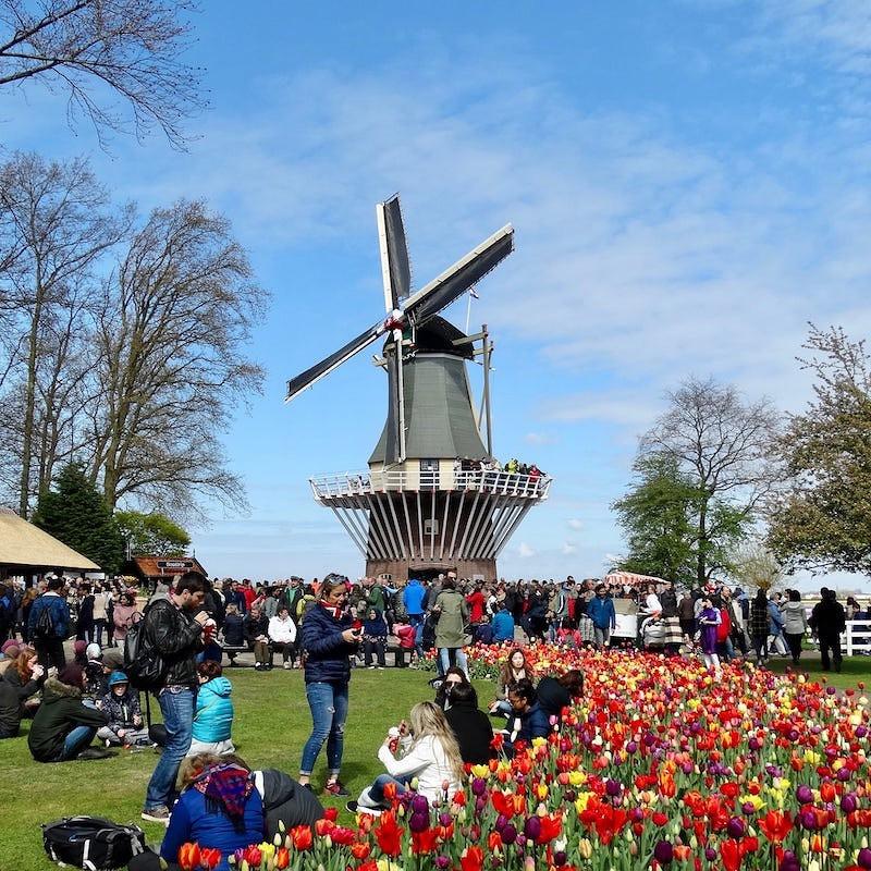 moulin au centre du parc keukenhof de lisse, à la saison des tulipes